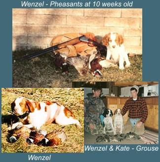 Memorials : Brittany Breeders – Wisconsin Bird Dog Breeders